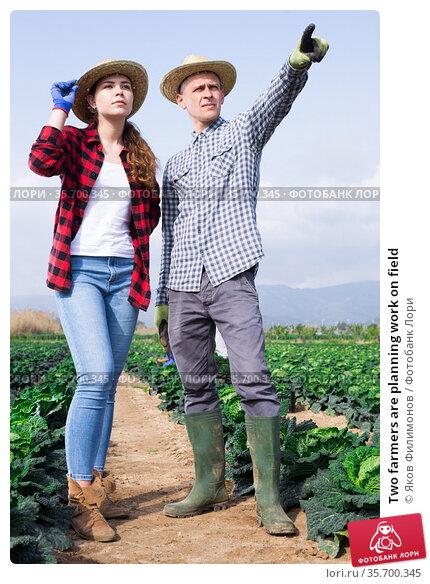 Two farmers are planning work on field. Стоковое фото, фотограф Яков Филимонов / Фотобанк Лори