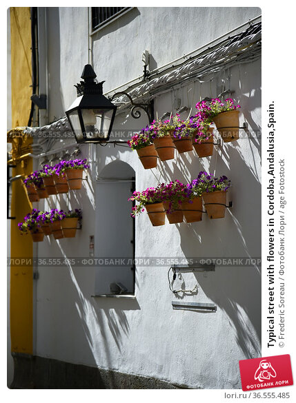 Typical street with flowers in Cordoba,Andalusia,Spain. Стоковое фото, фотограф Frederic Soreau / age Fotostock / Фотобанк Лори