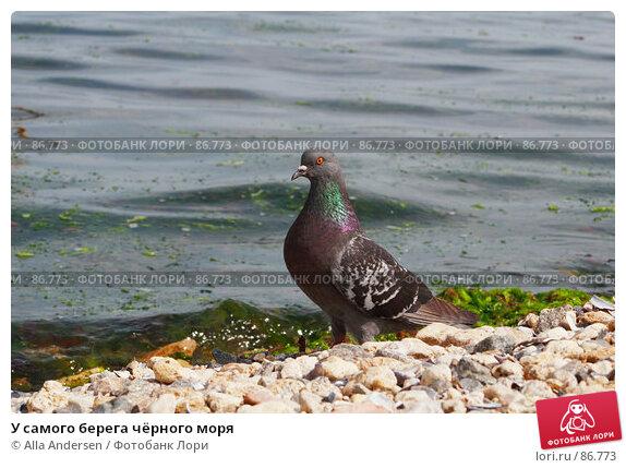 У самого берега чёрного моря, фото № 86773, снято 27 мая 2007 г. (c) Alla Andersen / Фотобанк Лори