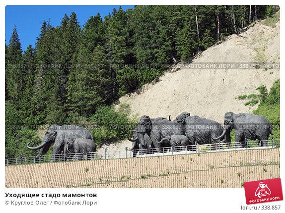 Купить «Уходящее стадо мамонтов», фото № 338857, снято 23 июня 2008 г. (c) Круглов Олег / Фотобанк Лори