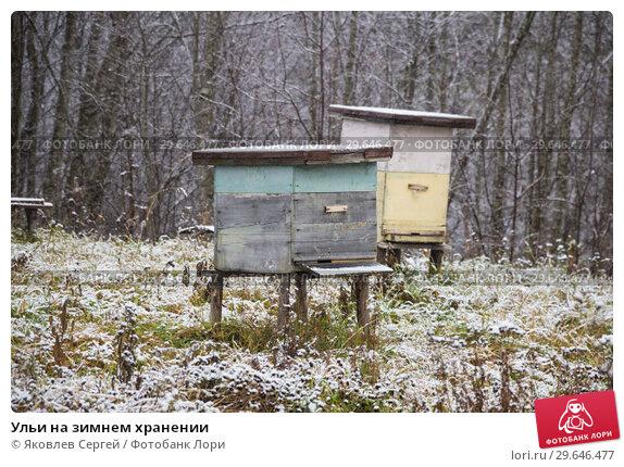 Купить «Ульи на зимнем хранении», фото № 29646477, снято 9 ноября 2018 г. (c) Яковлев Сергей / Фотобанк Лори