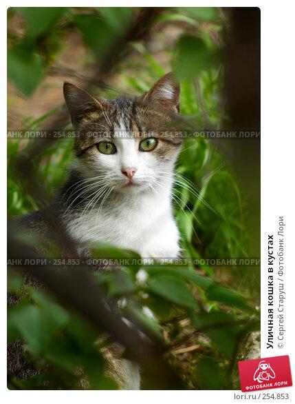Уличная кошка в кустах, фото № 254853, снято 12 апреля 2008 г. (c) Сергей Старуш / Фотобанк Лори