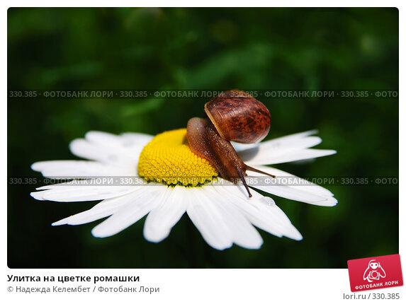 Улитка на цветке ромашки, фото № 330385, снято 12 июня 2008 г. (c) Надежда Келембет / Фотобанк Лори