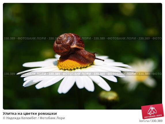 Улитка на цветке ромашки, фото № 330389, снято 12 июня 2008 г. (c) Надежда Келембет / Фотобанк Лори