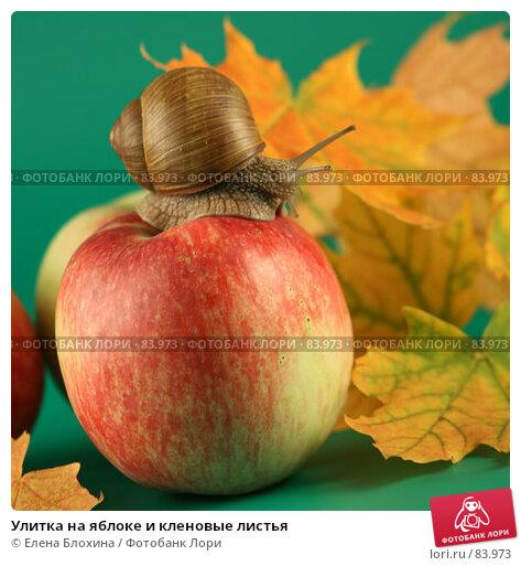 Купить «Улитка на яблоке и кленовые листья», фото № 83973, снято 13 сентября 2007 г. (c) Елена Блохина / Фотобанк Лори