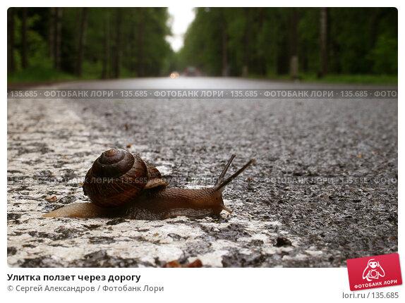 Улитка ползет через дорогу, фото № 135685, снято 30 мая 2007 г. (c) Сергей Александров / Фотобанк Лори