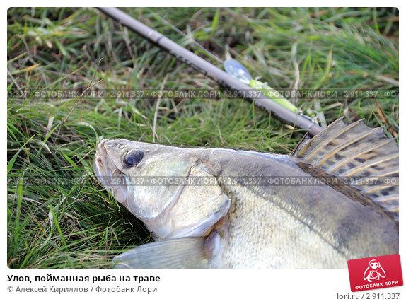 ahk рыбалка