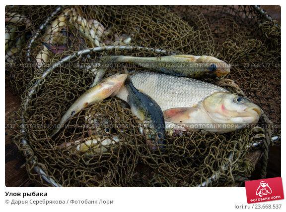 рыбак улов фото