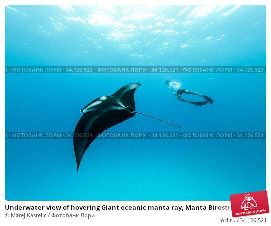 Купить «Underwater view of hovering Giant oceanic manta ray, Manta Birostris , and man free diving in blue ocean. Watching undersea world during adventure snorkeling tour on Maldives islands.», фото № 34126521, снято 23 декабря 2019 г. (c) Matej Kastelic / Фотобанк Лори
