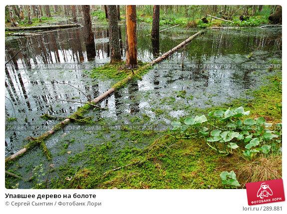 Упавшее дерево на болоте, фото № 289881, снято 30 июня 2007 г. (c) Сергей Сынтин / Фотобанк Лори