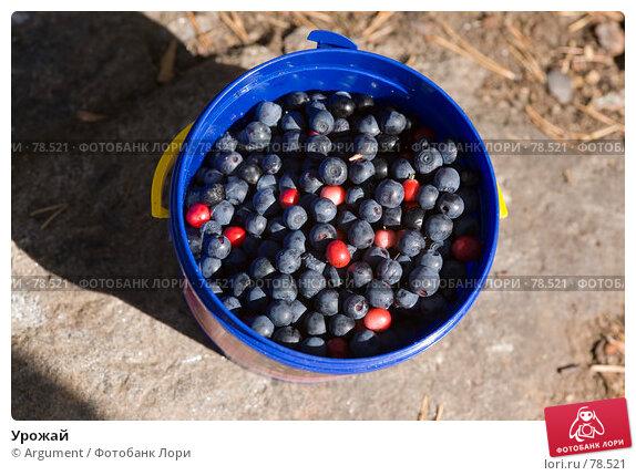 Купить «Урожай», фото № 78521, снято 19 августа 2007 г. (c) Argument / Фотобанк Лори
