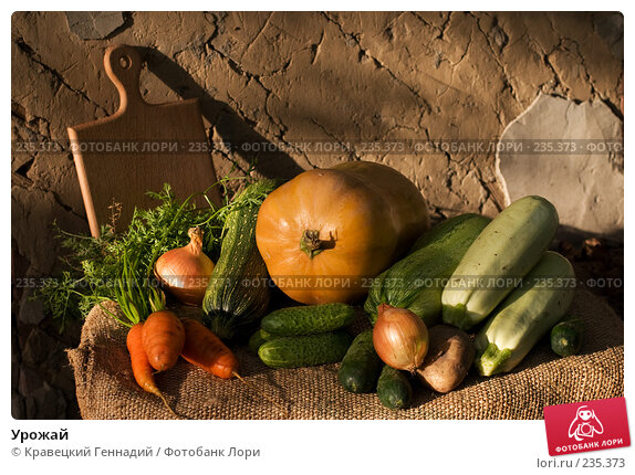 Урожай, фото № 235373, снято 10 декабря 2016 г. (c) Кравецкий Геннадий / Фотобанк Лори