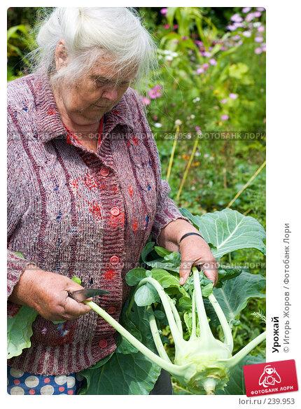 Урожай, фото № 239953, снято 15 августа 2007 г. (c) Игорь Жоров / Фотобанк Лори