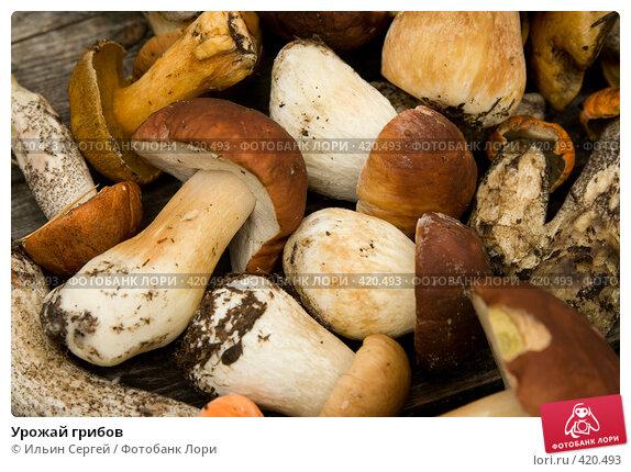 Купить «Урожай грибов», фото № 420493, снято 24 августа 2008 г. (c) Ильин Сергей / Фотобанк Лори
