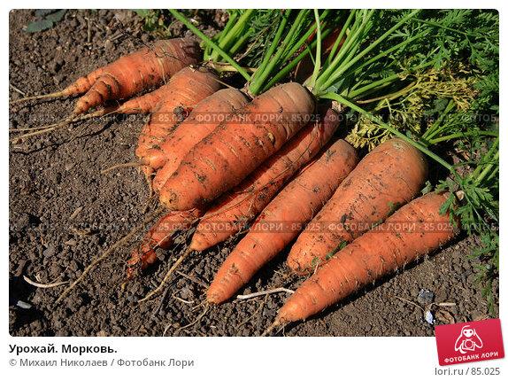 Урожай. Морковь., фото № 85025, снято 9 сентября 2007 г. (c) Михаил Николаев / Фотобанк Лори