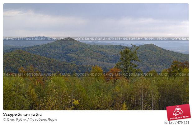 Купить «Уссурийская тайга», фото № 479121, снято 25 сентября 2008 г. (c) Олег Рубик / Фотобанк Лори