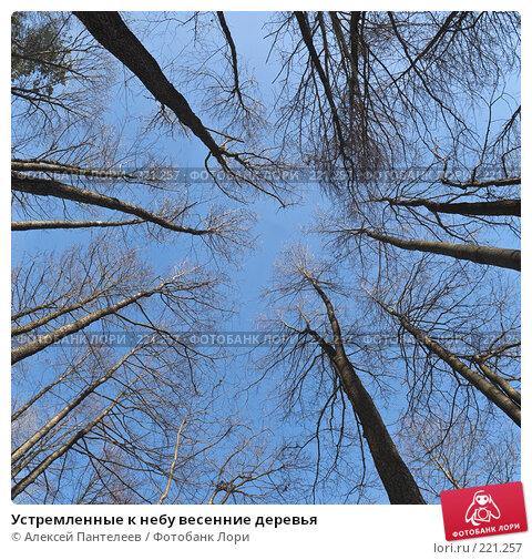 Устремленные к небу весенние деревья, фото № 221257, снято 10 марта 2008 г. (c) Алексей Пантелеев / Фотобанк Лори