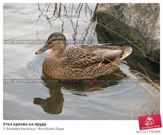 Утка кряква на пруду, фото № 178909, снято 28 октября 2007 г. (c) Беляева Наталья / Фотобанк Лори