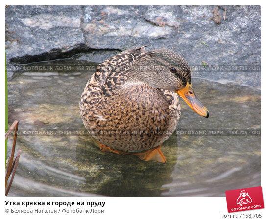 Утка кряква в городе на пруду, фото № 158705, снято 18 октября 2007 г. (c) Беляева Наталья / Фотобанк Лори