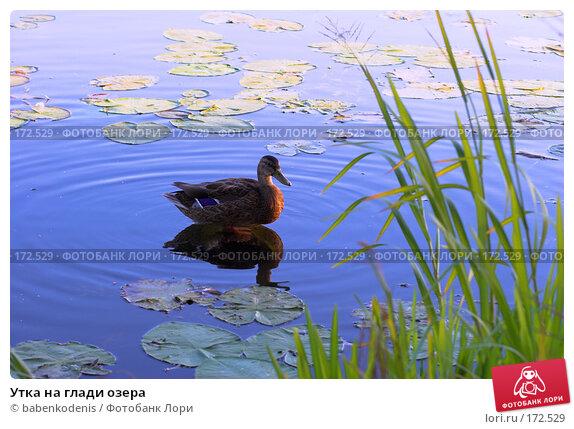 Купить «Утка на глади озера», фото № 172529, снято 11 сентября 2007 г. (c) Бабенко Денис Юрьевич / Фотобанк Лори