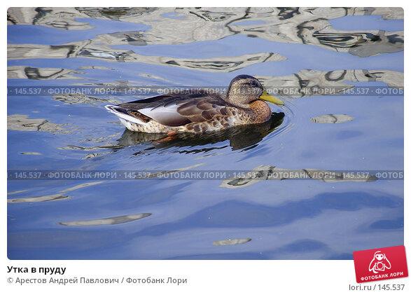 Утка в пруду, фото № 145537, снято 13 августа 2007 г. (c) Арестов Андрей Павлович / Фотобанк Лори