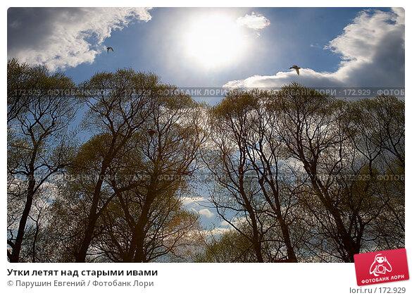 Утки летят над старыми ивами, фото № 172929, снято 28 февраля 2017 г. (c) Парушин Евгений / Фотобанк Лори