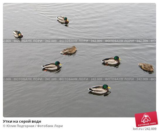Утки на серой воде, фото № 242009, снято 8 марта 2008 г. (c) Юлия Селезнева / Фотобанк Лори