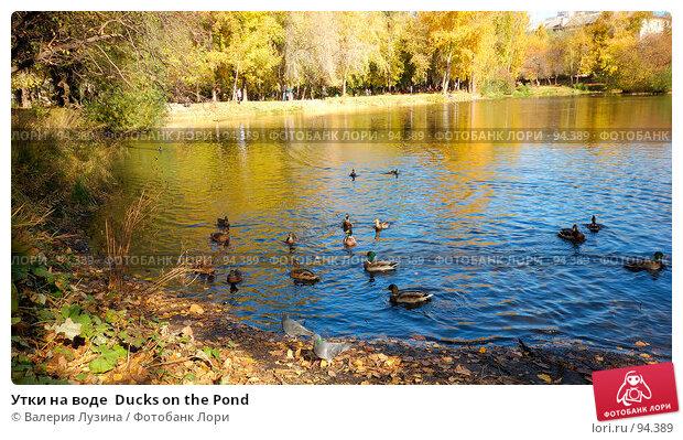 Утки на воде  Ducks on the Pond, фото № 94389, снято 2 октября 2007 г. (c) Валерия Потапова / Фотобанк Лори