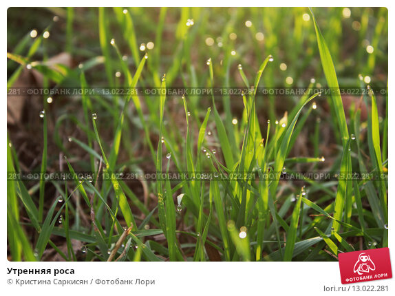 Утренняя роса. Стоковое фото, фотограф Кристина Саркисян / Фотобанк Лори