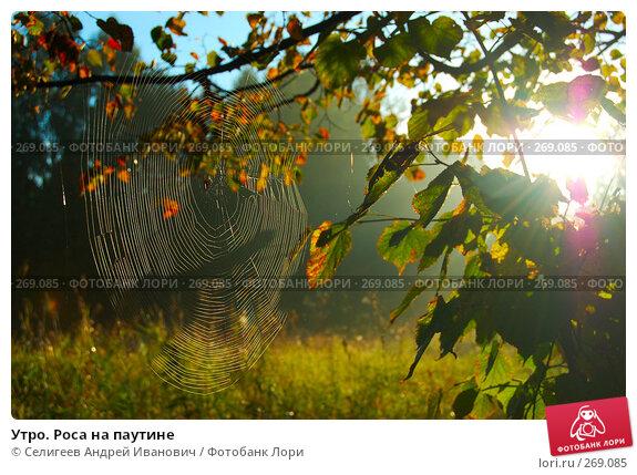Утро. Роса на паутине, фото № 269085, снято 25 августа 2006 г. (c) Селигеев Андрей Иванович / Фотобанк Лори