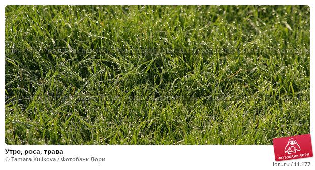 Утро, роса, трава, фото № 11177, снято 17 октября 2006 г. (c) Tamara Kulikova / Фотобанк Лори