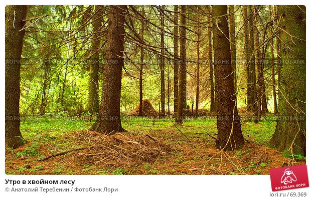Утро в хвойном лесу, фото № 69369, снято 21 июля 2007 г. (c) Анатолий Теребенин / Фотобанк Лори