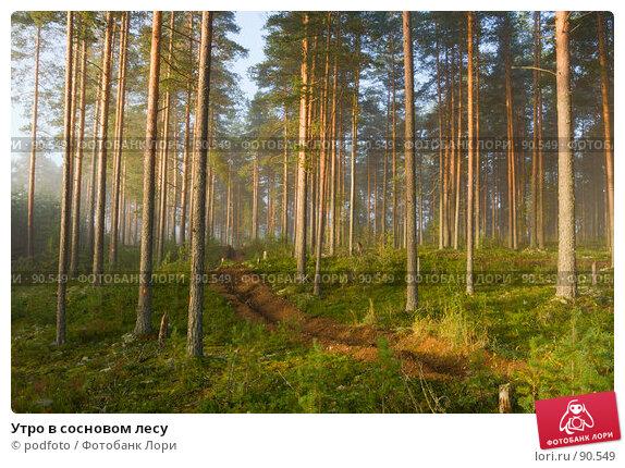 Утро в сосновом лесу, фото № 90549, снято 8 сентября 2007 г. (c) podfoto / Фотобанк Лори