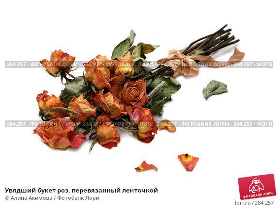 Увядший букет роз, перевязанный ленточкой, фото № 284257, снято 13 мая 2008 г. (c) Алина Акимова / Фотобанк Лори