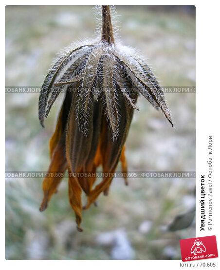 Увядший цветок, фото № 70605, снято 4 ноября 2006 г. (c) Parmenov Pavel / Фотобанк Лори