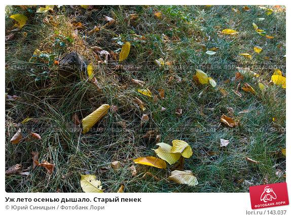 Уж лето осенью дышало. Старый пенек, фото № 143037, снято 7 сентября 2007 г. (c) Юрий Синицын / Фотобанк Лори