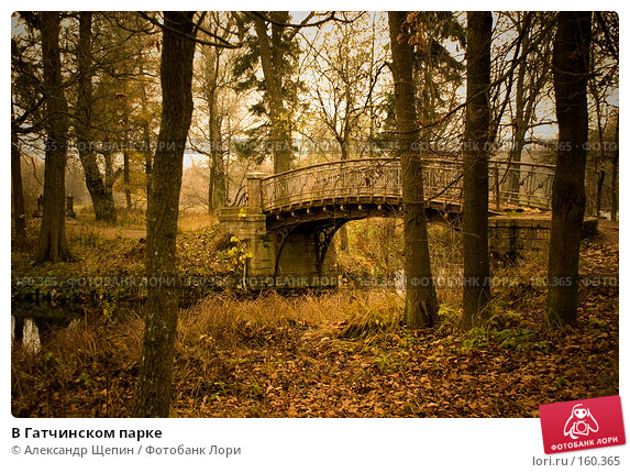 В Гатчинском парке, эксклюзивное фото № 160365, снято 28 октября 2007 г. (c) Александр Щепин / Фотобанк Лори