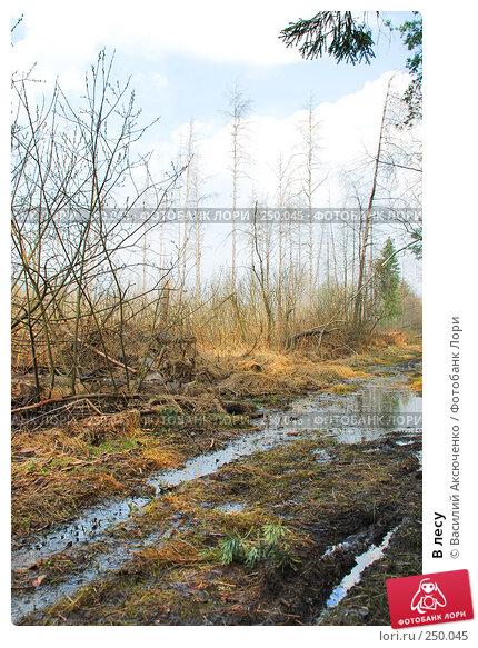 В лесу, фото № 250045, снято 12 апреля 2008 г. (c) Василий Аксюченко / Фотобанк Лори