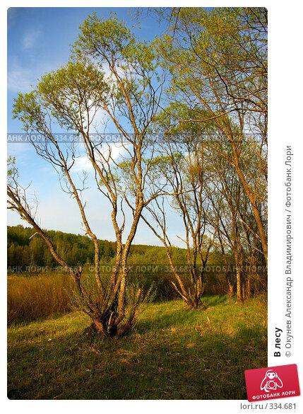В лесу, фото № 334681, снято 9 мая 2008 г. (c) Окунев Александр Владимирович / Фотобанк Лори