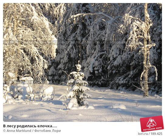 В лесу родилась елочка...., фото № 189425, снято 27 января 2008 г. (c) Anna Marklund / Фотобанк Лори