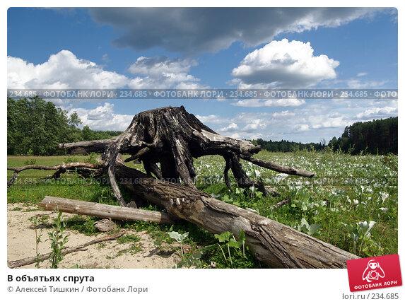 В объятьях спрута, фото № 234685, снято 24 июня 2007 г. (c) Алексей Тишкин / Фотобанк Лори