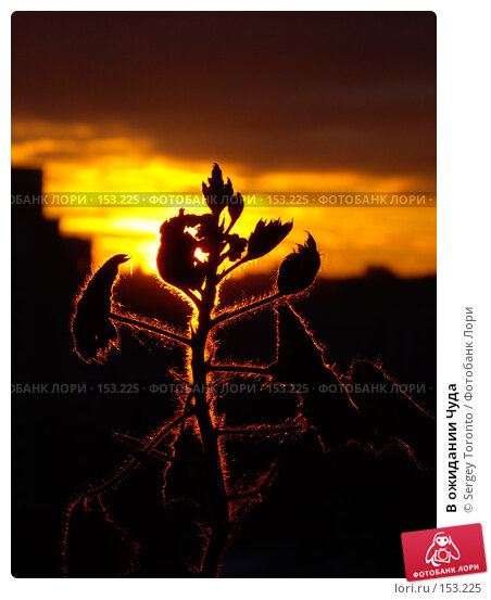В ожидании Чуда, фото № 153225, снято 15 декабря 2007 г. (c) Sergey Toronto / Фотобанк Лори