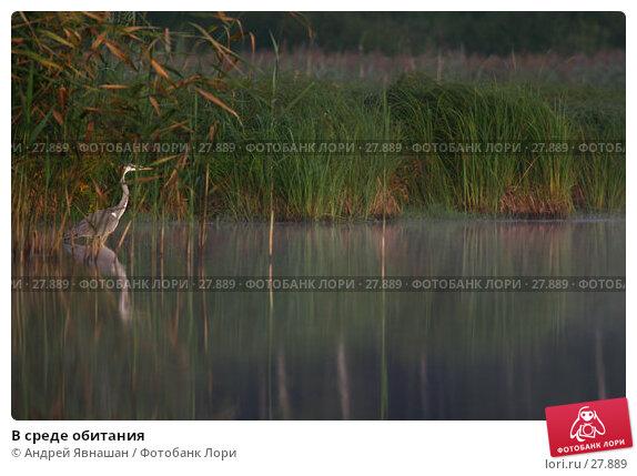 В среде обитания, фото № 27889, снято 19 августа 2006 г. (c) Андрей Явнашан / Фотобанк Лори