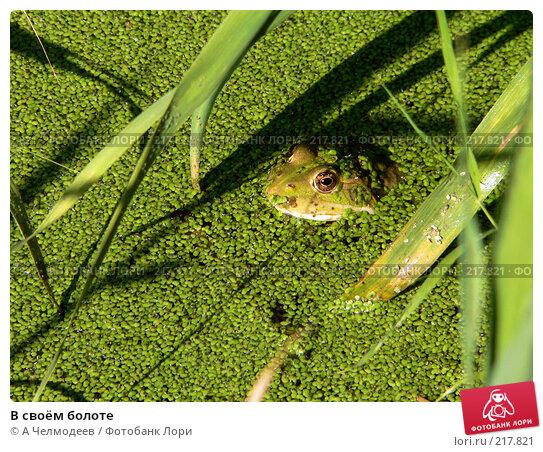 В своём болоте, фото № 217821, снято 30 июля 2006 г. (c) A Челмодеев / Фотобанк Лори