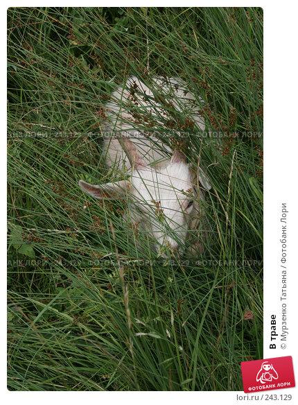 В траве, фото № 243129, снято 18 июня 2007 г. (c) Мурзенко Татьяна / Фотобанк Лори