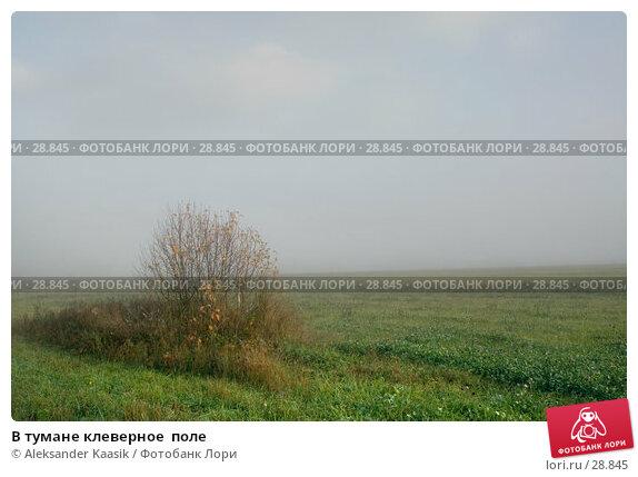 Купить «В тумане клеверное  поле», фото № 28845, снято 21 апреля 2018 г. (c) Aleksander Kaasik / Фотобанк Лори