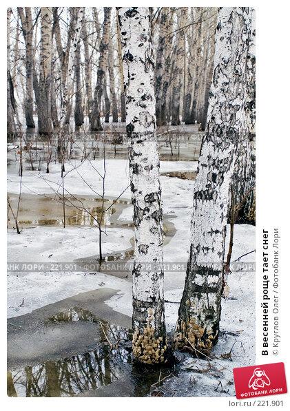 В весенней роще тает снег, фото № 221901, снято 7 апреля 2007 г. (c) Круглов Олег / Фотобанк Лори