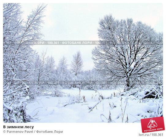В зимнем лесу, фото № 100361, снято 15 февраля 2007 г. (c) Parmenov Pavel / Фотобанк Лори