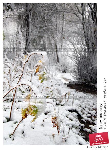 В зимнем лесу, фото № 149397, снято 14 октября 2007 г. (c) Сергей Пестерев / Фотобанк Лори