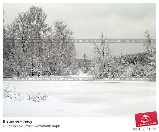 В зимнем лесу, фото № 151153, снято 15 февраля 2007 г. (c) Parmenov Pavel / Фотобанк Лори